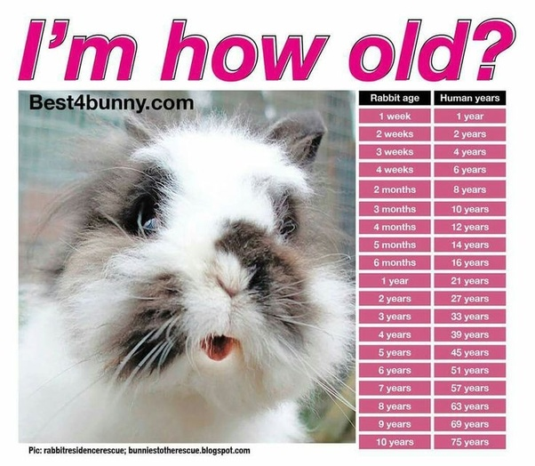 This Chart Shows Rabbit To Human Age Conversion