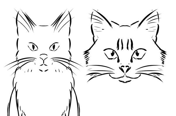 Line Drawing Of A Cat Face : How to improve my cat drawings quora