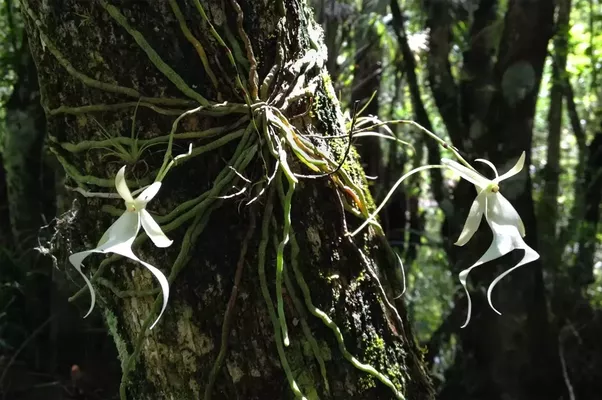 Theres Even A Leafless Orchid