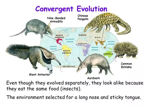 Given how drastically a single change in the evolutionary ...