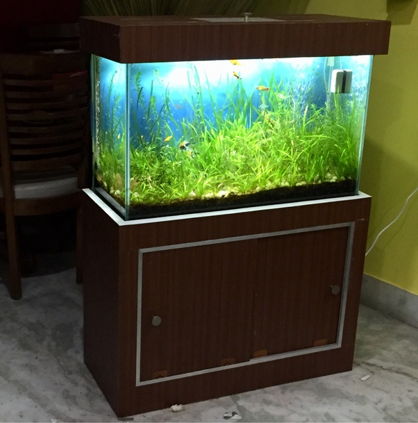 Can You Show Me What Your Aquarium Looks Like Quora
