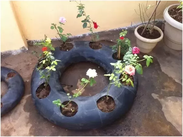 What can be used as containers for terrace garden in india for Terrace vegetable garden india