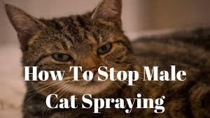 reasons also in behalf of priapic kitten spraying