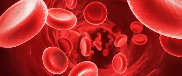 What Is An Example Of A Red Blood Cells Diagram Quora