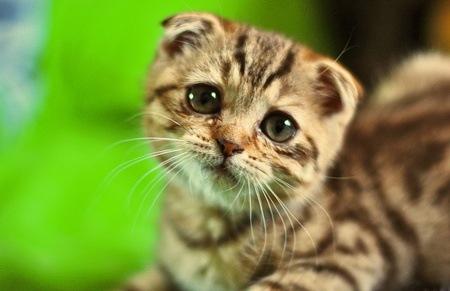 What are some cute sad animals? - Quora