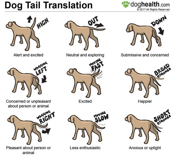 Cat And Dog Translator
