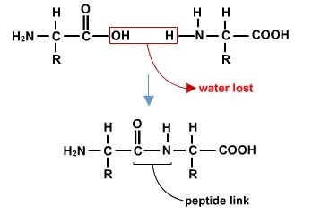 what is condensation reaction