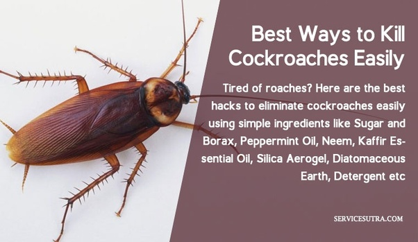 What are the best home remedies to get rid of cockroaches? - Quora