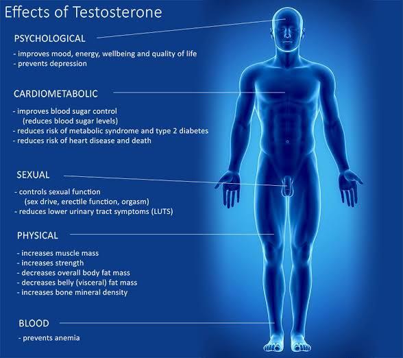 high testosterone and prostatitis)