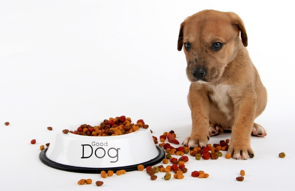 What Is The Best Puppy Food Quora