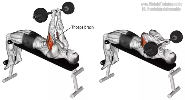 How To Increase The Strength Of My Triceps Quora