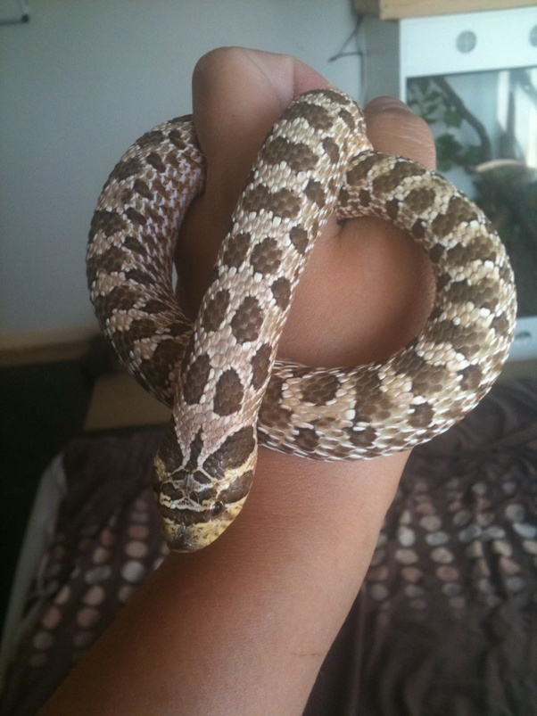 How big can a snake get? - Quora