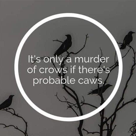 whats a group of crows called