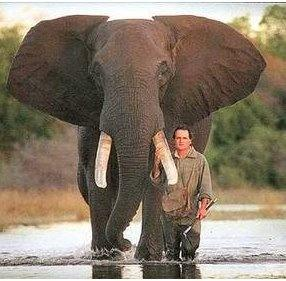 what are the best elephant jokes quora