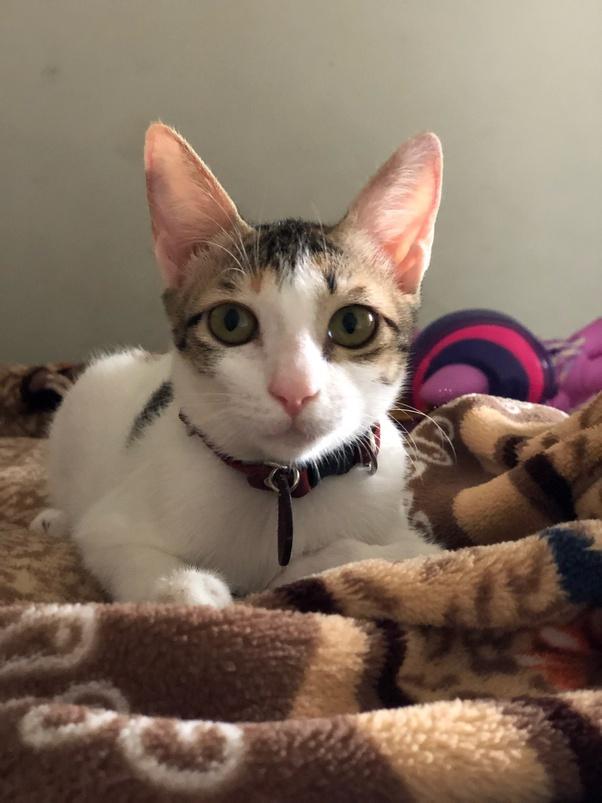Kucing Saya Selalu Panik Saat Dimandikan Bagaimana Cara Memandikan Kucing Dengan Benar Quora