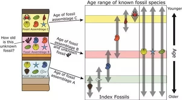 What Are the Four Types of Fossils