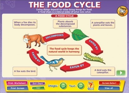 How Are Animals And Plants Interdependent Quora