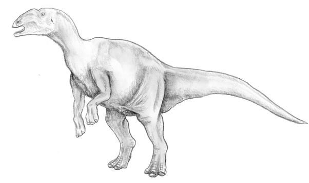 Were There Herbivorous Bipedal Dinosaurs Quora
