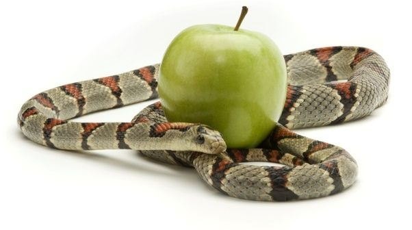 Who Is The Serpent In Genesis According To Judaism Quora