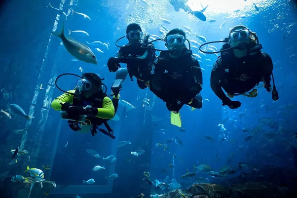 What is the cost of scuba diving in Dubai? - Quora