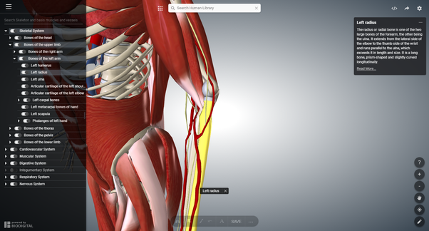What Is The Best Free Website To Learn Human Anatomy In 3d While