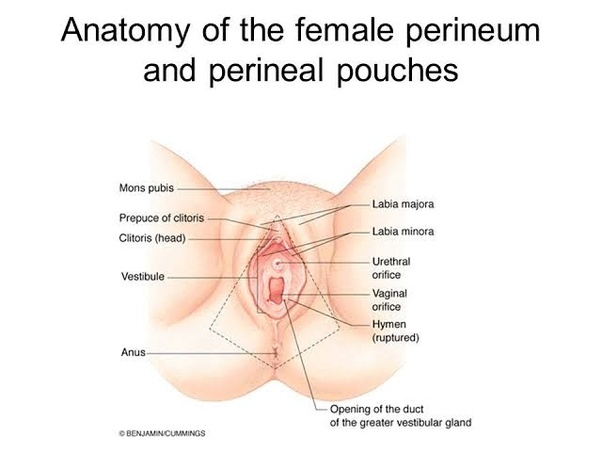 Where is the pennis put in during sex