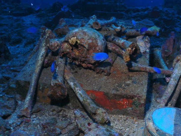 Why do you never see bodies in shipwreck photos? Is it