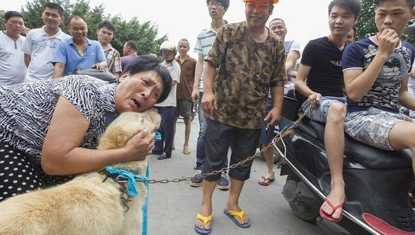 In China they boil cats alive because they claim it makes their meat
