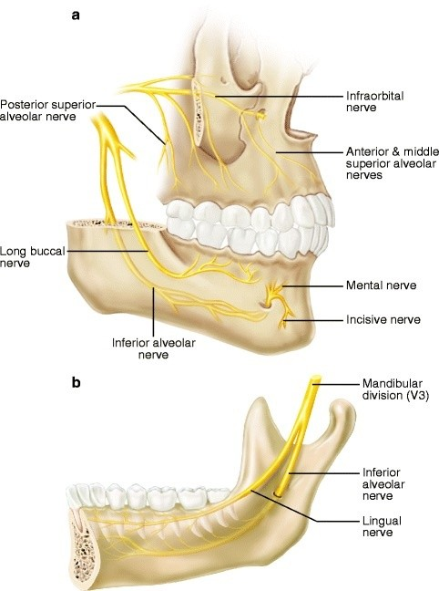 What are the chances of getting nerve damage during wisdom teeth ...