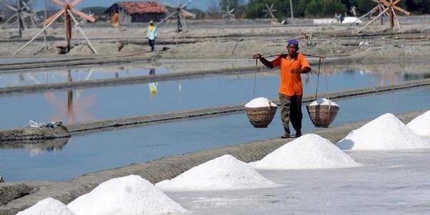 petani garam indonesia