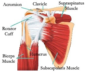 how to help a tear in your shoulder naturally