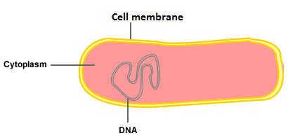 What are the 3 basic parts of a complete cell quora related questionsmore answers below ccuart Images