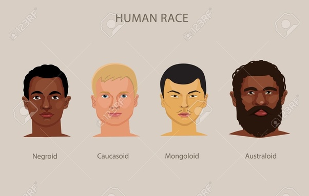 b4c0efc59 Are human skulls of different  races  much different  - Quora