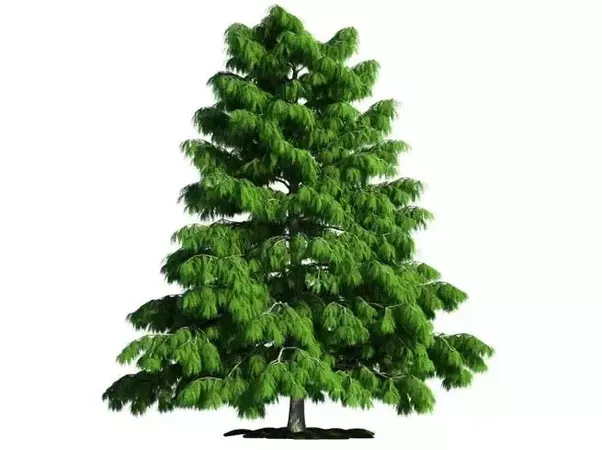 Which Tree Should I Plant In Front My House For Shade In