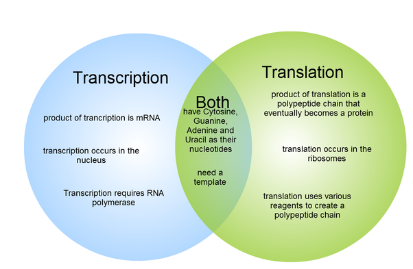 What Are The Major Differences Between Transcription And Translation In Dna And Rna