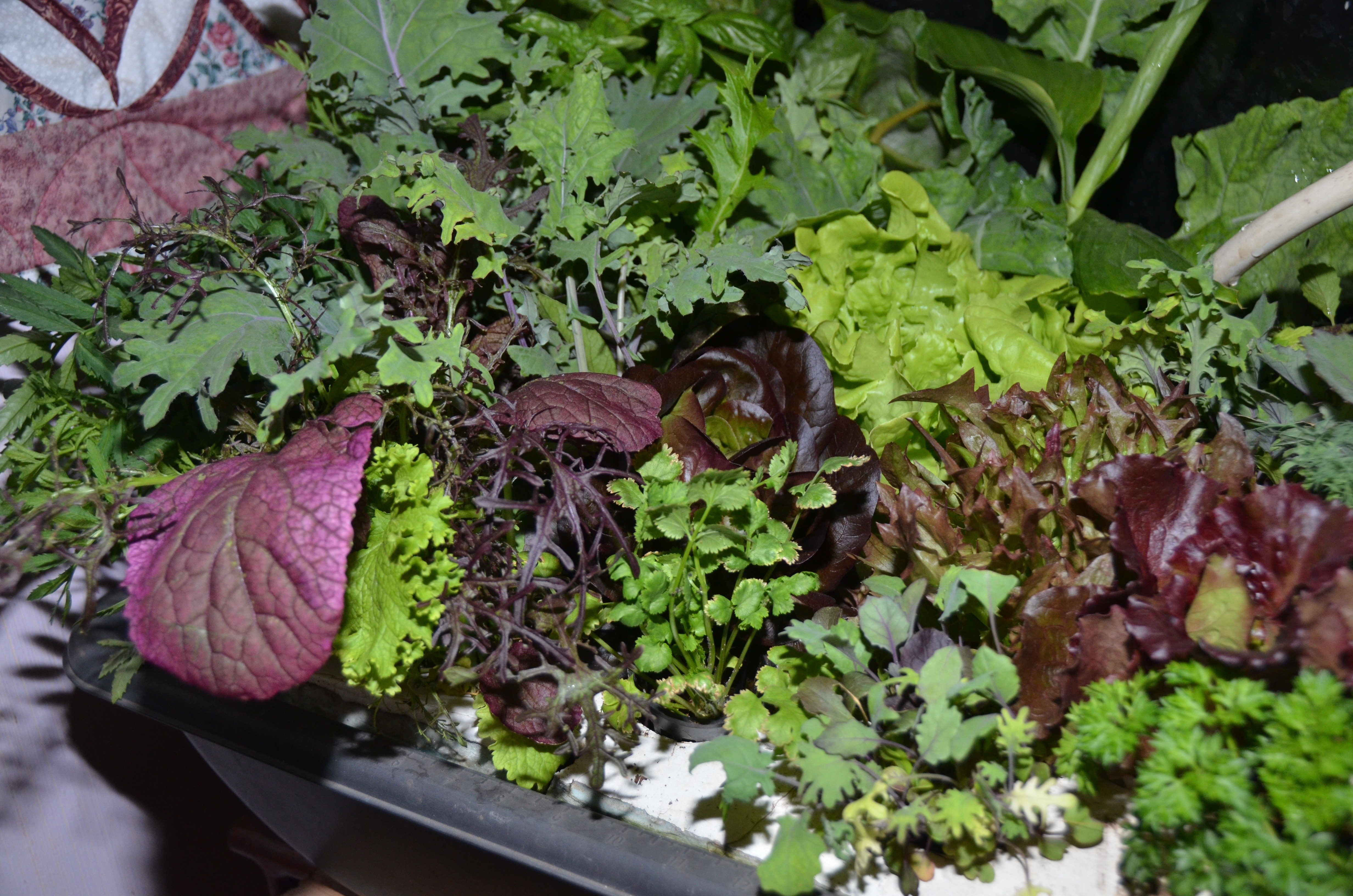 Are there turnkey aquaponic systems out there that will both