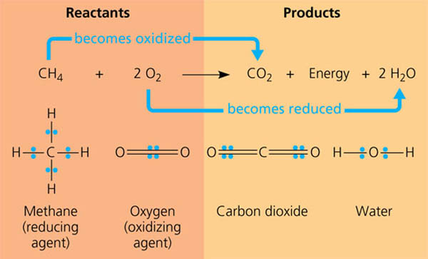 Chemistry What Are Examples Of Oxidation Reactions And What Free