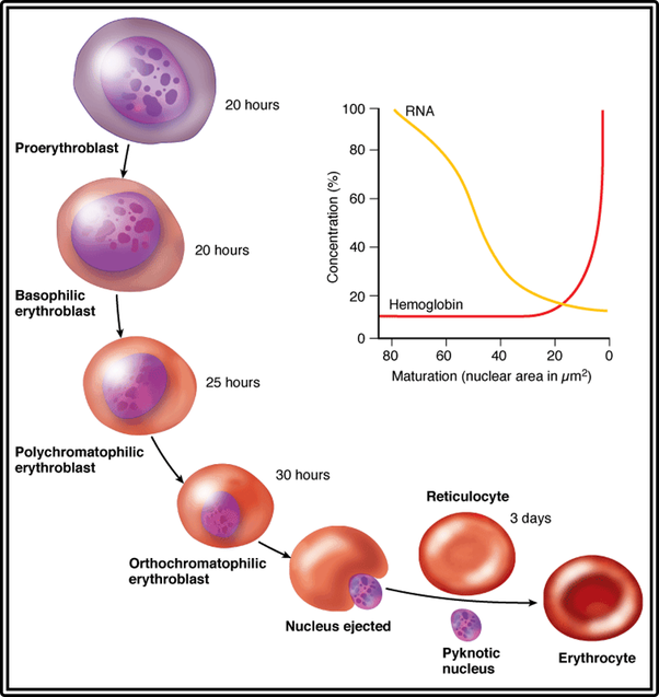 Carbonic >> What are characteristics only red blood cells posses? - Quora