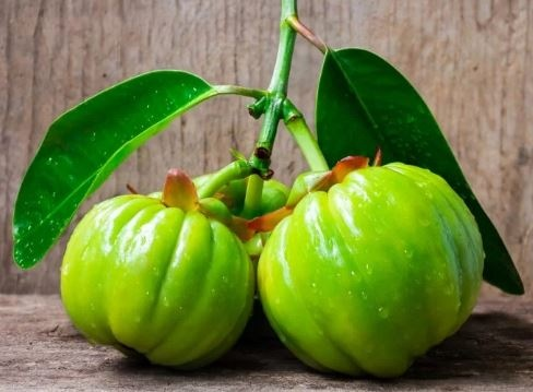 What Is Garcinia Cambogia And Does It Really Help In Weight Loss Quora