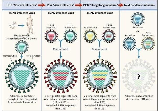 how does the naming scheme for viruses like h1n1 or h5n8. Black Bedroom Furniture Sets. Home Design Ideas