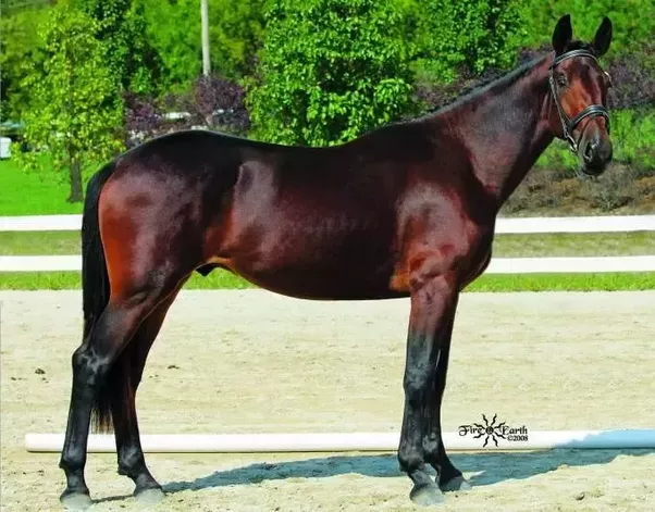 bay horse coloring pages - photo#1
