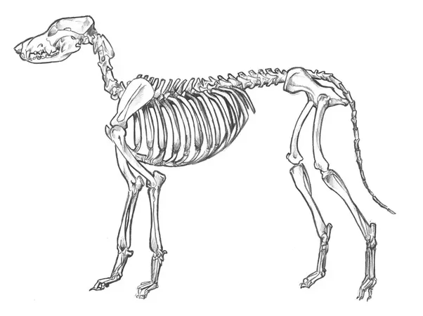 Why Do Some Animals Have Forward Facing Front Knees Like Horsescows
