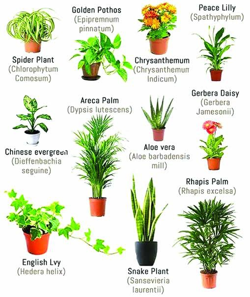 Is Keeping Plants Inside A House The