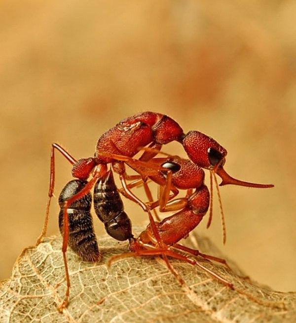 Do Ants Ever Go To War Quora