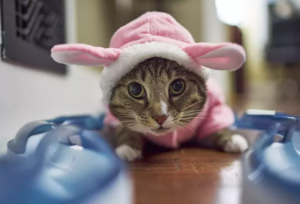 From a psychological point of view what makes cats so cute quora cats are cute to everyone cuteness is in the eye of the beholder owners will learn the little mannerisms and peculiarities of their particular cats voltagebd Image collections