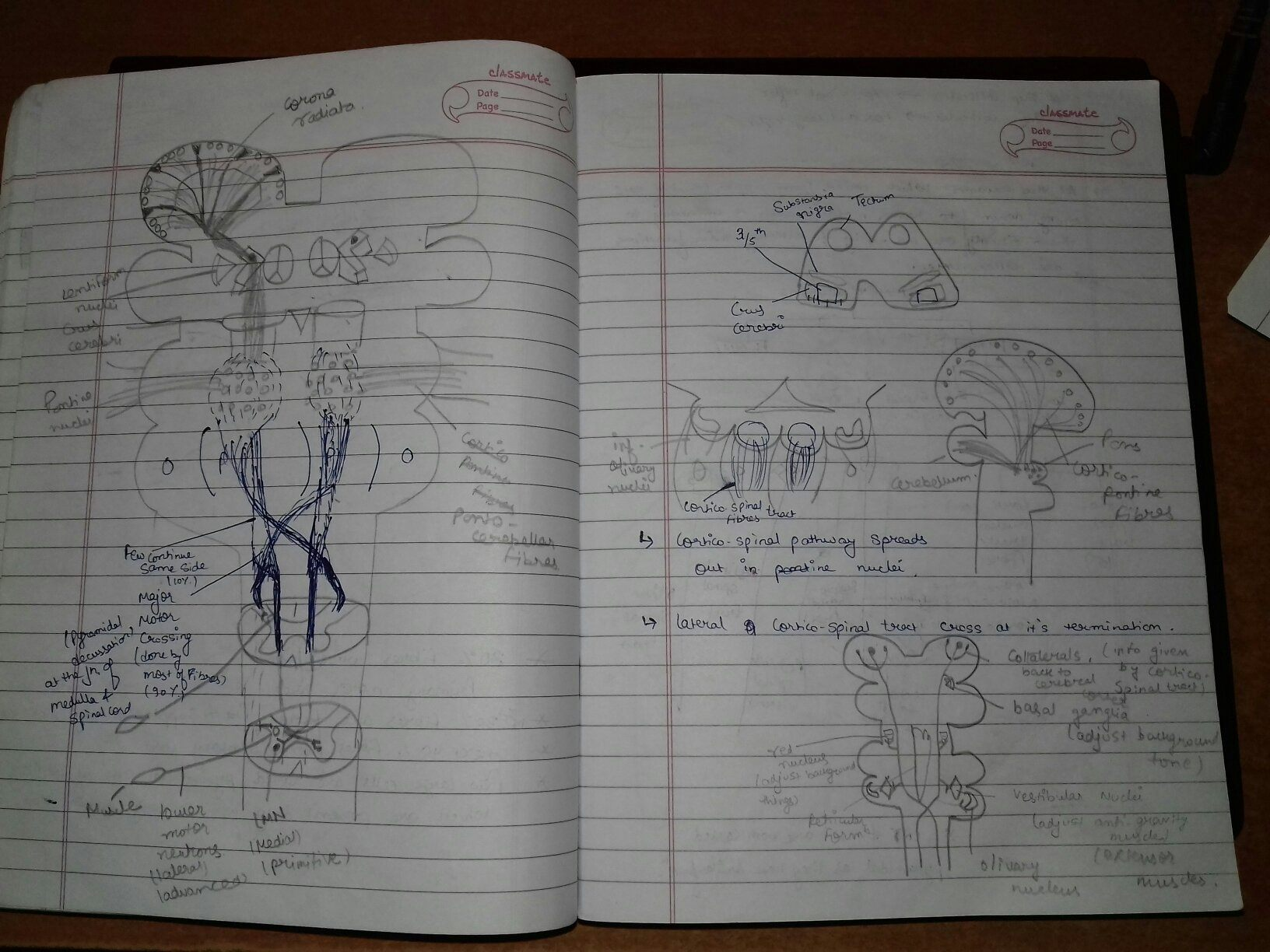Dr Najeeb Notes