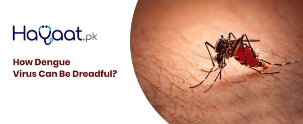 What are the symptoms of dengue fever? - Quora