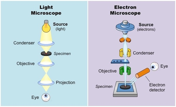 what is the difference between optical microscope and electron microscope