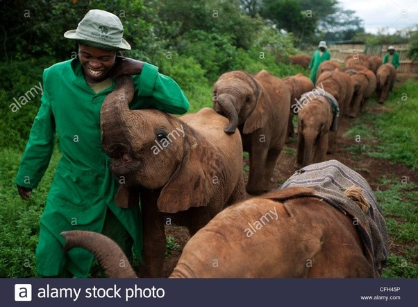 What Are The Special Characteristics Of An Elephant Quora
