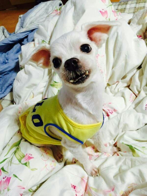 Which BTS members have pets? - Quora